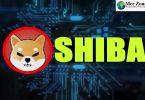 Shiba Inu Price in India